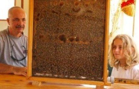 בית הדבש